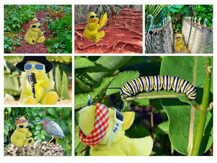 Ein kleiner Auszug aus den aktuellen BigB-Pictures aus de Dschungel. Mehr gibt es bei Facebook, Twitter, Instagram oder Pinterest.